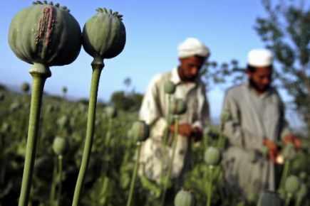 Afghanistan-drogue : niet américain à Moscou