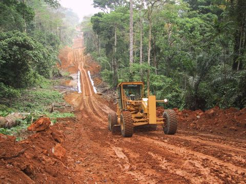 Brésil : Le code forestier, l'environnement et l'agriculture