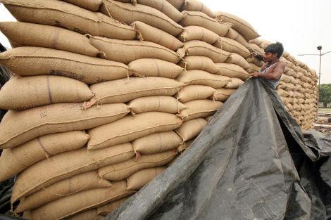 Inde/France : pénurie du riz basmati en perspective