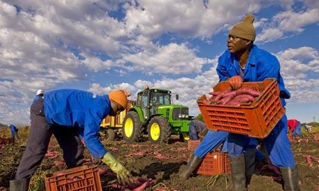 Afrique : la sécurité alimentaire sur le continent