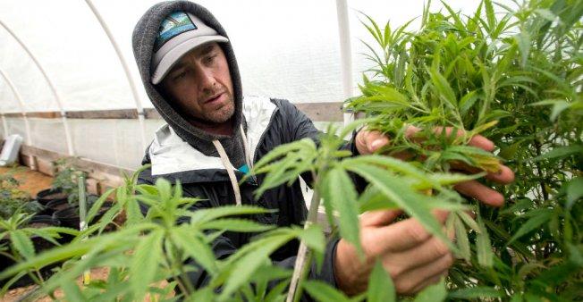 Etats-Unis : l'usage récréatif du cannabis légalisé en Californie